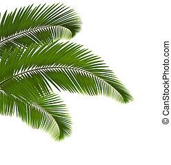 illustration., zöld, háttér., vektor, pálma, fehér