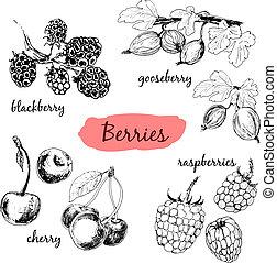 illustrationer, berries., sätta