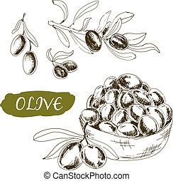 illustrationer, sätta, oliv
