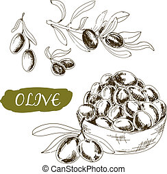 illustrationer, sätta, olive.
