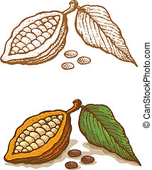 illustrations, cacao