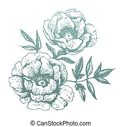 illustrations, flowers., hand-drawn
