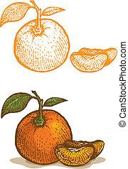illustrations, mandarine