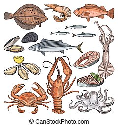 Illustrations of sea food products for gourmet menu. Vector...