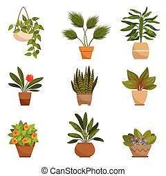 Illustrations set of home decorative plants. Vector pictures isolate on white
