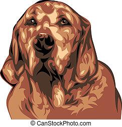 illustrato, cane