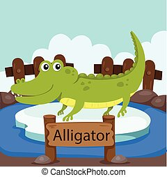Illustrator of Alligator in the zoo