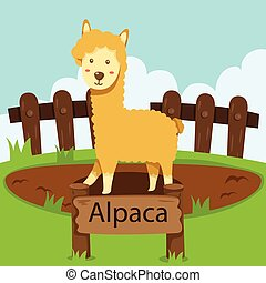 Illustrator of Alpaca in the zoo