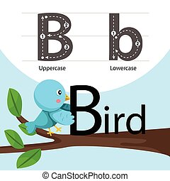 Illustrator of bird with b font