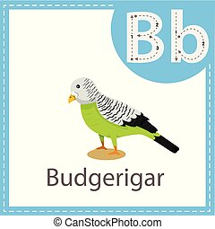 Illustrator of Budgerigar bird