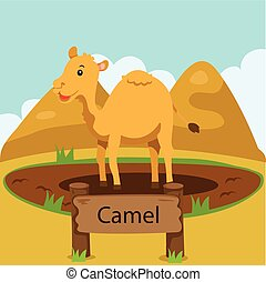 Illustrator of camel in the zoo