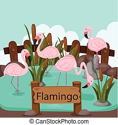 Illustrator of flamingo in the zoo