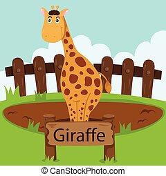 Illustrator of Giraffe in the zoo