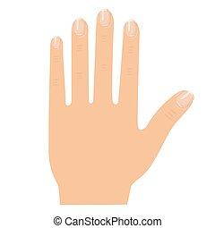Illustrator of hand