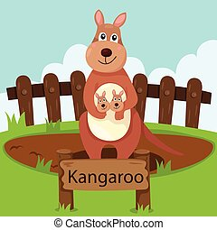 Illustrator of kangaroo in the zoo