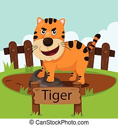 Illustrator of tiger in the zoo