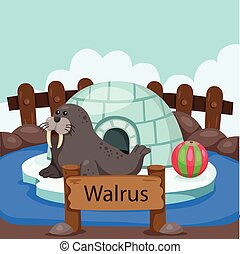 Illustrator of Walrus in the zoo