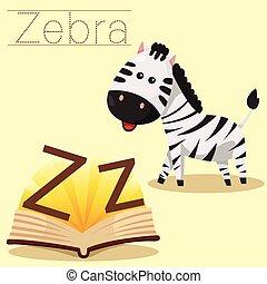 Illustrator of Z for Zebra vocabula
