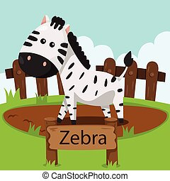 Illustrator of zebra in the zoo