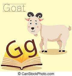 illustrator, vocabular, g, cabra