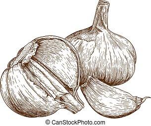 illustrazione, aglio