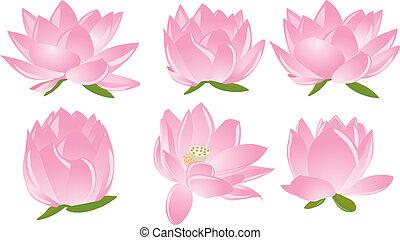 illustrazione, di, lotus(waterlily)