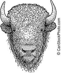 illustrazione, disegno, incisione, vettore, bisonte, inchiostro, art linea