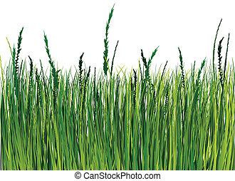 illustrazione, erba