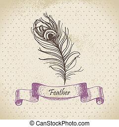 illustrazione, fondo, pavone, feather., vendemmia, mano, disegnato