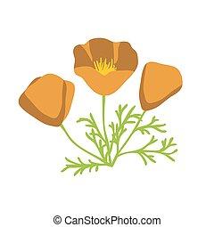 illustrazione, papavero, california