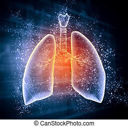 illustrazione, polmoni, umano, schematico