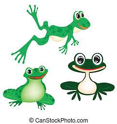 illustrazione, rana, verde bianco