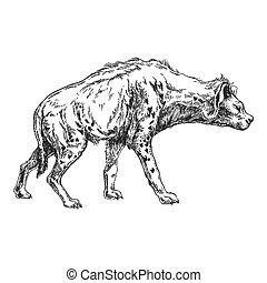 illustrazione, tatuaggio, stile, disegnato, image., classico, vendemmia, emblema, incisione, zoo., mano, t-shirt, fauna., distintivo, hyena., selvatico, animal., disegno, africano, print.