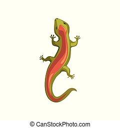 illustrazione, vettore, anfibio, sopra, lucertola, animale, cartone animato, vista