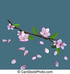 illustrazione, vettore, rosa, ciliegia, volare, isolato, ramo, fondo., -, albero, petali, fiore, sakura, blu, giapponese