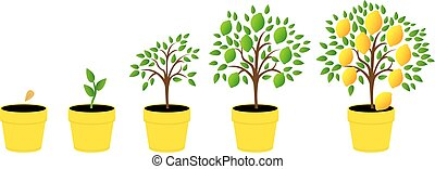illustrazioni, fasi, set, crescita, pianta