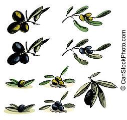 illustrazioni, oliva