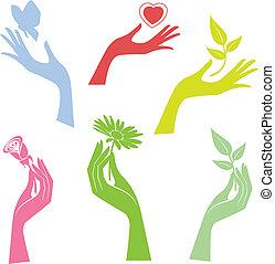 illusztrált, virág, átnyújtás, kéz