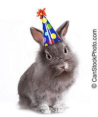 ilsket, furry, grå kanin, med, a, födelsedag hatt, på