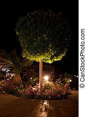 iluminación, jardín, noche