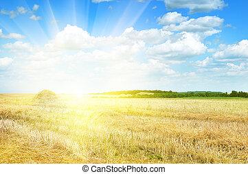 iluminado, campo, sol