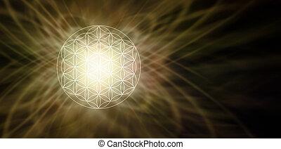 iluminado, flor, de, vida, sepia, plano de fondo