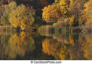 iluminado, forest:, sol, lago, árvores, refletir, outono, amarela, foliage, torna-se, golden., superfície, floresta