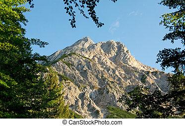 iluminado por el sol, montaña, bordered, con, ramas