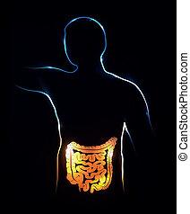 ilustração, abstratos, experiência., cólon, intestines.,...