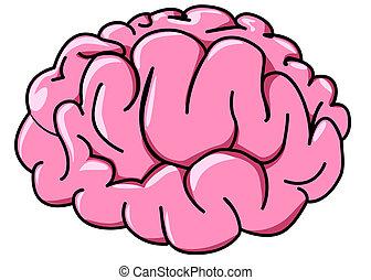 ilustração, cérebro humano, perfil