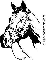 ilustração, cavalo