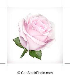 ilustração, cor-de-rosa levantou-se
