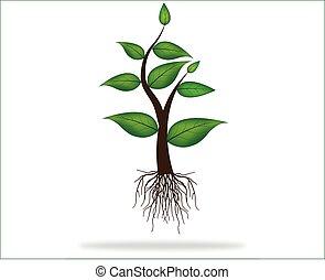 ilustração, de, planta, sapling, com, raizes, crescendo, ligado, abstratos, fundo