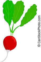 ilustração, de, vermelho, rabanete